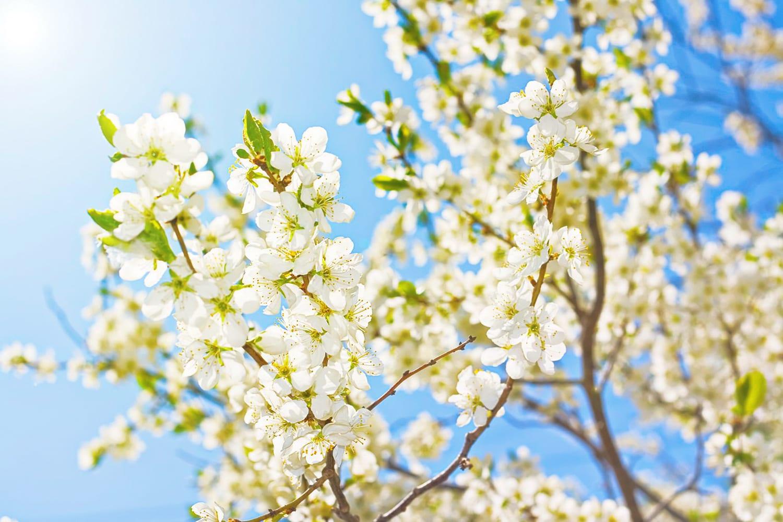 """Een nieuwe lente , een nieuwe taal. Onder dit motto bieden wij een training vakantietalen aan. Dit doen wij omdat het zo leuk is contact te kunnen leggen met de inwoners van uw vakantieland. U kunt in deze periode bij ons terecht voor de volgende talen: Duits, Engels, Frans Zweeds, Noors ,Russisch en Chinees. Bij deze cursussen staat de spreekvaardigheid centraal, zodat u niet meteen met uw mond vol tanden staat. U kunt b.v. een menukaart lezen, vragen stellen over de omgeving enz. Ook als u uw huidige talenkennis wilt opfrissen, kunt u zich aanmelden. De training wordt in kleine groepen gegeven en eindigt voor het begin van de schoolvakanties. Hebt u ook met plezier gekeken naar de t.v. serie """"Langs de oevers van de Yangtze""""? Onze docente Chinees biedt een introductiecursus Chinees aan voor beginners."""